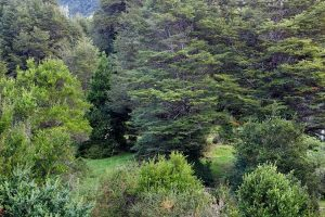 terreno-palena-ID-patagonia-horte-real-estate-propiedades_23