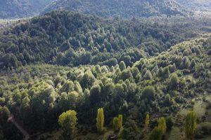 terreno-palena-ID-patagonia-horte-real-estate-propiedades_26
